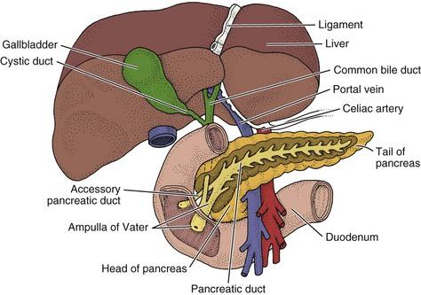 Screening For Hepatic And Biliary Disease Musculoskeletal Key